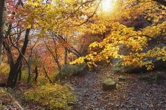 Сезон осени на национальном парке Bukhansan стоковые фотографии rf