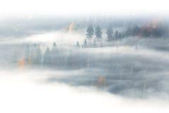 Сезон осени, одичалый лес в тумане восхода солнца и облака Стоковое фото RF