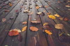 Сезон осени с красочными листьями осени стоковые фотографии rf