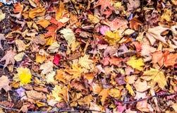 Сезон падений Стоковая Фотография