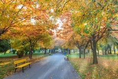 Сезон падения в парке Стоковое Изображение