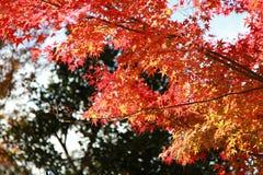 Сезон падения на Киото в Японии стоковые изображения rf