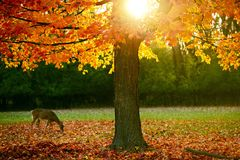Сезон падения в парке Стоковое Изображение RF