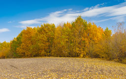 Сезон падения на краю аграрного поля Стоковые Изображения
