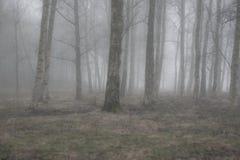 Сезон падения 6 Стоковое фото RF