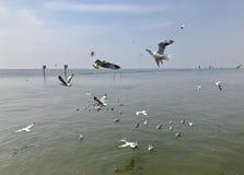 Сезон птицы стоковое фото rf