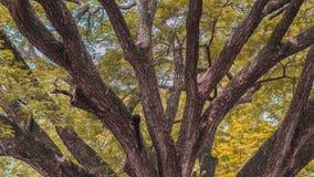 сезон путя пущи падения осени стоковое изображение rf