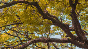сезон путя пущи падения осени стоковые фотографии rf