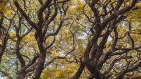 сезон путя пущи падения осени стоковая фотография