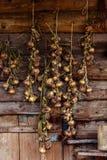 Сезон сбора, заплетенные луки высушили на предпосылке woode Стоковая Фотография RF