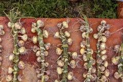 Сезон сбора, заплетенных луков на ржавой заплетенной предпосылке, Стоковая Фотография