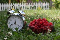 Сезон ягоды стоковые фотографии rf