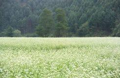 сезон стоковое изображение rf