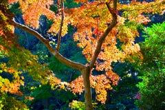 Сезон Autume в Японии Стоковые Изображения