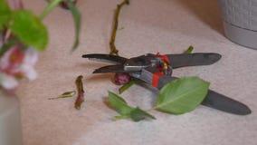 Секаторы сада и отрезанные ветви боярышника сток-видео