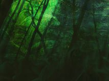 Секретное Forrest Стоковая Фотография