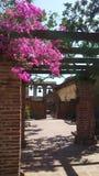 Секретный сад II в San Juan Capistrano стоковые фотографии rf