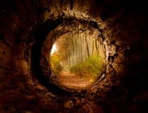 Секретный тоннель к очарованной тропе леса Стоковые Фотографии RF