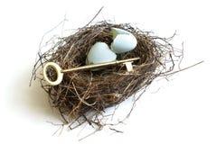 Секреты яйц из гнезда Стоковые Изображения