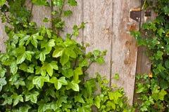 секрет двери Стоковые Фотографии RF