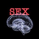 секс мозга Стоковое фото RF