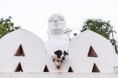 селективный фокус бездомной собаки с религиозным памятником на предпосылке, Азии Стоковые Фотографии RF