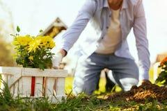 Селективный фокус желтых цветков Стоковые Изображения