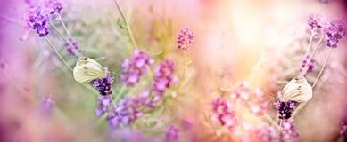 Селективный фокус на бабочке на лаванде осветил солнечным светом Стоковая Фотография