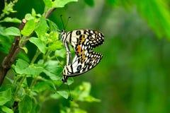 Селективный фокус на крыле или специальный пункт для красочной бабочки Стоковое Фото