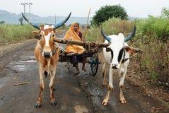 село жизни Индии Стоковое Изображение RF