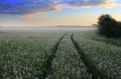 село лета вечера Стоковое Изображение RF