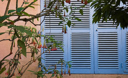 село riviera mimosas les Франции bormes французское стоковые изображения