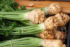 Сельдерей Свежее органическое черенок сельдерея с листьями и корнями еда принципиальной схемы здоровая Зеленая еда витамина Диета стоковые фотографии rf