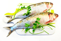 сельди рыб Стоковые Изображения