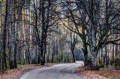 Сельская дорога в лесе, Литве стоковые изображения