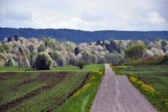 Сельская дорога с вишневыми деревьями на заднем плане Стоковое Изображение RF