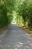 Сельская дорога фланкированная с деревьями Стоковые Изображения