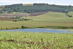 Сельская запруда и взгляд Стоковые Фотографии RF