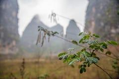 Сельская местность в Yangshuo, Китае Стоковая Фотография