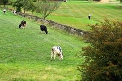 сельская местность используя Стоковое Фото