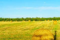 Сельская местность и стога сена около borden-Carleton, PEI стоковые изображения rf
