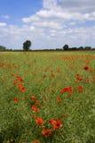 Сельская местность лета Стоковое Изображение RF