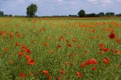 Сельская местность лета Стоковое Изображение