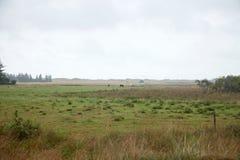 Сельская местность, одичалый луг с туманом Стоковое Фото