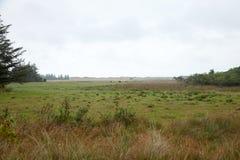 Сельская местность, одичалый луг с туманом Стоковые Изображения RF