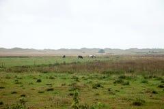 Сельская местность, одичалый луг с туманом Стоковые Фото
