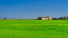Сельская местность около верчелли, Италии, на лете стоковое фото