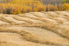 сельская местность осени Стоковое Изображение