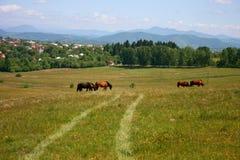 сельская местность пася лошадей landscape лето стоковое изображение rf