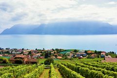 Сельская местность тропы террасы виноградника Lavaux Швейцарии Стоковое Изображение RF